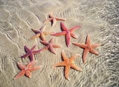 Fonds d'écran Animaux Etoile de mer  (A Soulac/mer)