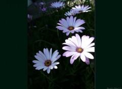 Fonds d'écran Nature De jolies fleurs