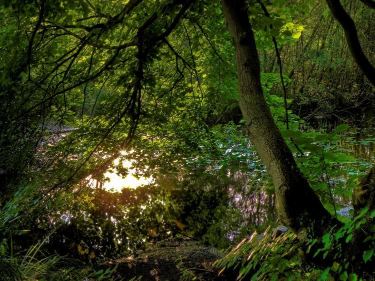 Fonds d'écran Nature Lacs - Etangs Etangs de Commelle