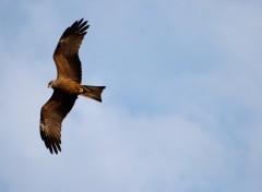 Fonds d'écran Animaux Vol belle oiseau vers la liberté