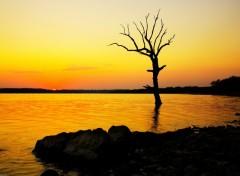 Fonds d'écran Nature Silhouette sur ciel d'or