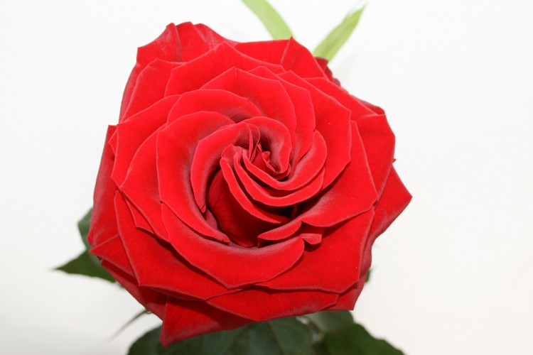 Fonds D Ecran Nature Fonds D Ecran Fleurs Rose Rouge Par Rosecool
