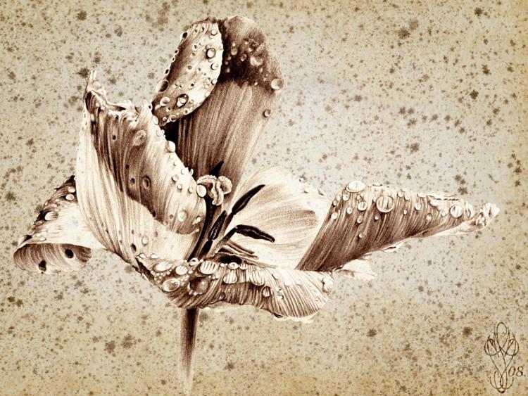Fonds d'écran Art - Peinture Fleurs L'Appel de la Tulipe