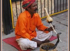 Wallpapers Trips : Asia Charmeur de serpents à Delhi