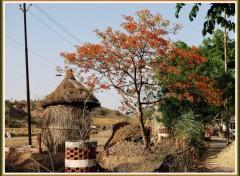 Wallpapers Trips : Asia Sur la route de Fatehpur Sikri - Rajasthan