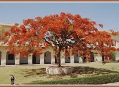 Fonds d'écran Voyages : Asie Flamboyant à Sariska - Rajasthan