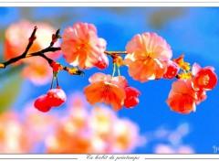 Fonds d'écran Nature En habit de printemps