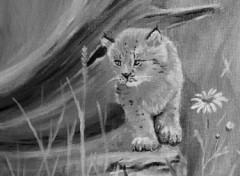 Fonds d'écran Art - Peinture Bébé lynx