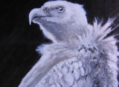 Wallpapers Art - Painting Vautour