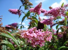 Fonds d'écran Nature arbre a papillons