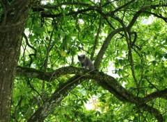Fonds d'écran Animaux chaton de courtouphle