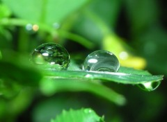 Wallpapers Nature Goutte d'eau