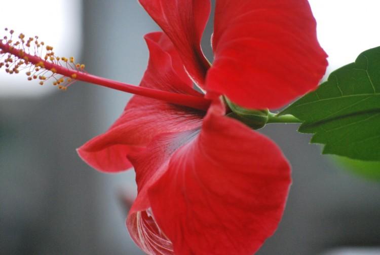 Fonds d'écran Nature Fleurs Wallpaper N°241417