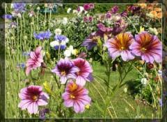 Fonds d'écran Nature Jardin de beau-papa