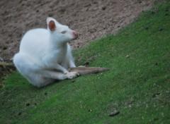 Fonds d'écran Animaux Petit animal blanc