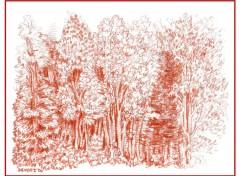 Fonds d'écran Art - Crayon Forêt de Vinci