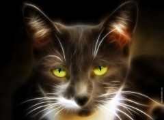 Wallpapers Animals Claudio le Chat des Rues