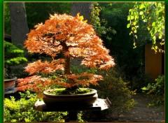 Fonds d'écran Nature Parc floral de Vinvennes