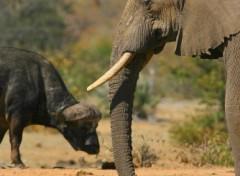Fonds d'écran Animaux elephant