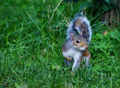 Wallpapers Animals The Squirrel