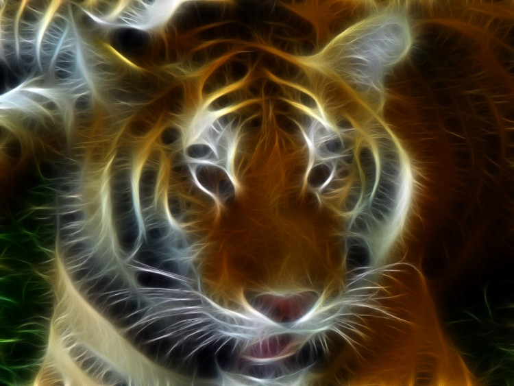 fonds d 39 cran art num rique fonds d 39 cran animaux tigre par carlhoude. Black Bedroom Furniture Sets. Home Design Ideas