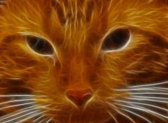 Fonds d'écran Art - Numérique chats de feu