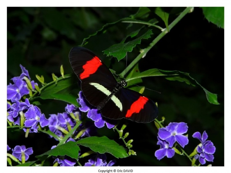 Wallpapers Animals Insects - Butterflies Wallpaper N°252160