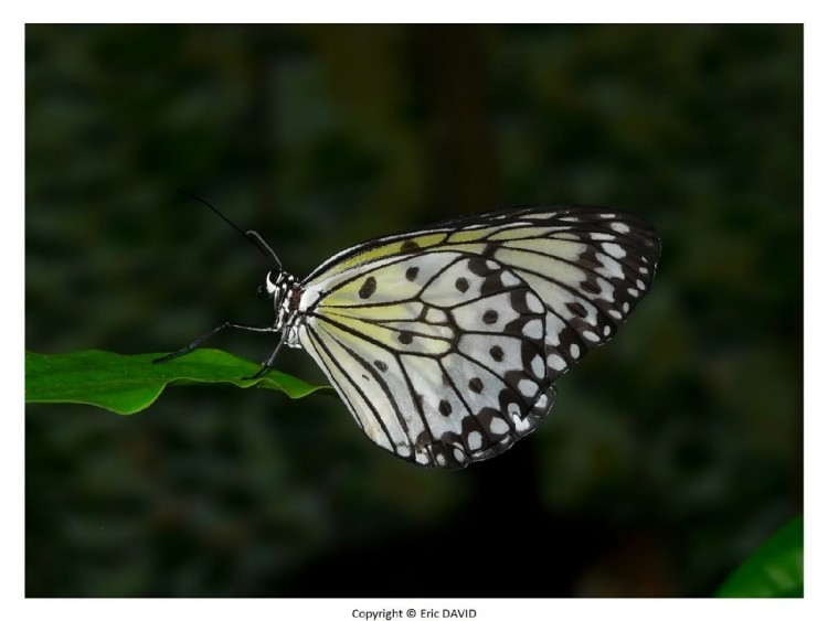 Wallpapers Animals Insects - Butterflies Wallpaper N°252158
