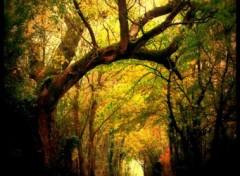 Fonds d'écran Nature Un lieu magique...