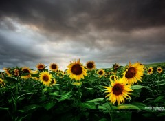 Wallpapers Nature L'orage
