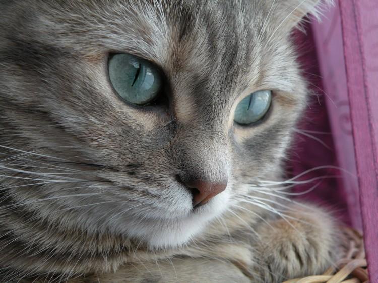 Fonds d'écran Animaux Chats - Chatons Ma Pippin, le retour