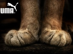 Wallpapers Animals Paire de Pattes de Puma