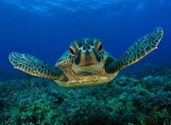 Wallpapers Animals Tortues de mer
