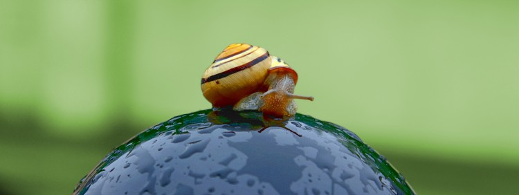 Wallpapers Animals Snails - Slugs Regarde-moi bien en face