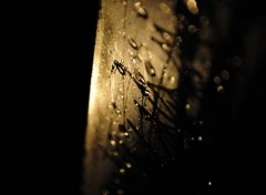 Photos Abstrait - Art Rainy Night