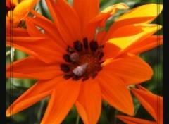 Fonds d'écran Nature Jolie fleur Orange et ses petit coquillages.