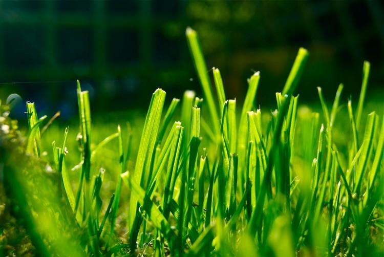 Fonds d'écran Nature Herbes Herbes