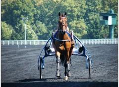 Fonds d'écran Sports - Loisirs Hippodrome de Vincennes