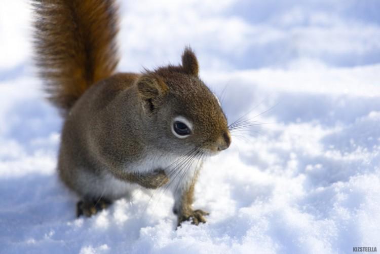 Fonds d'écran Animaux Rongeurs - Ecureuils Jour de fraicheur