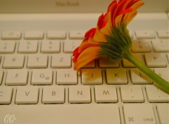Fonds d'écran Nature Fleur Mac