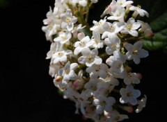 Wallpapers Nature Fleurs Blanches