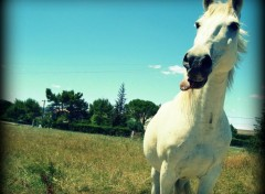 Wallpapers Animals Cheval