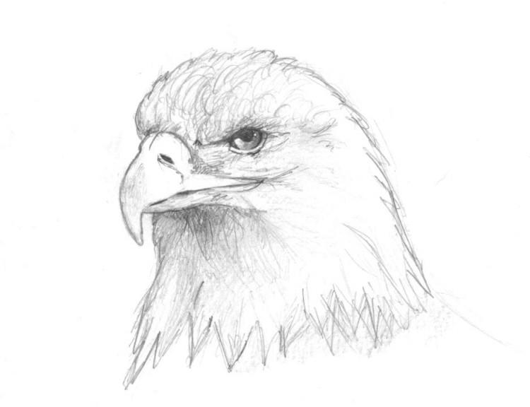 Wallpapers Art - Pencil Animals - Birds - Raptors Tête d'aigle