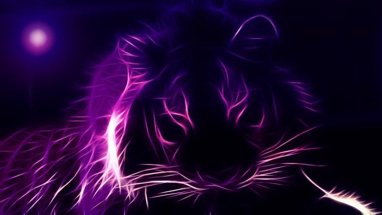 Fonds d'écran Animaux Félins - Tigres tigre du zoo