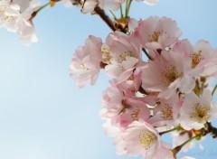 Fonds d'écran Nature Le printemps est de retour :-)