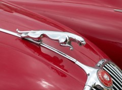 Fonds d'écran Voitures Emblème de Jaguar