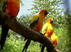 Fonds d'écran Animaux les perroquets