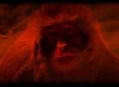 Fonds d'écran Art - Numérique monkey of darckness