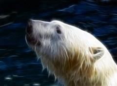 Fonds d'écran Art - Numérique ours polaire