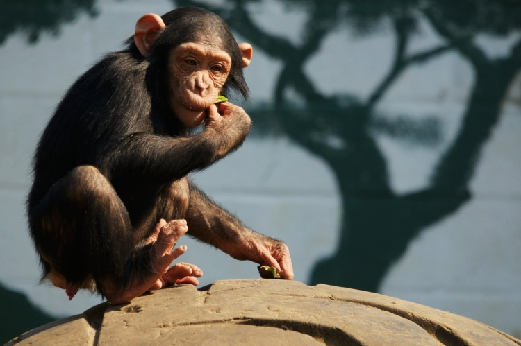 Wallpapers Animals Monkeys Wallpaper N°260347